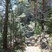 Auf 1060m zweigt ein Pfad vom Bergwanderweg durch den Goldauer Bergsturz ab zur Unter Hütte und Ochsenboden.