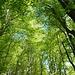 Il verde delle foglie dei faggi abbinato al blu del cielo.