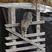 Katze oberhalb der Gilfenklamm