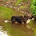 Was sucht der Hund nur im Wasser?