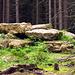 Freigelegte Felsen mitten im Wald