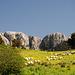 Monte Alba und Schafe