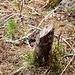 Über einigen Teilen des Aufstiegs sind Schnittspuren der Jäger sehr hilfreich
