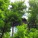 Die Ruine Kargegg geht im leuchtend grünen Buchenwald fast unter