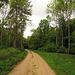 Weiterweg durch den Wald