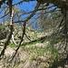 steiler, wegloser Abstieg vom Poncione del Macello zum Wanderweg.