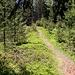 schöner Waldsteig am Juffunger Jöchl