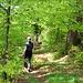 wunderbare Waldpfade im Abstieg