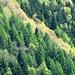 Colori del bosco 1