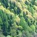 Colori del bosco 2