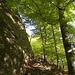 Pareti e bosco di maggio