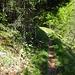 Super Waldweg