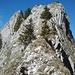 Schöne Felszacken zum überklettern<br />Einstieg bei Golmly<br />auf dem linken Felszacken kam es zu einem überraschten Treffen mit einem Adler