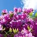 Blumenpracht in einer der Gärten, die zu einer Villen in Contra gehört.