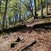Dann wirds etwas flacher und da.... ein durchsägter Baumstamm und der Überrest eines Steinmandls dahinter. Ich bin richtig.