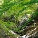 Frühlingshafter Wald im Aufstieg zur Alp Mans