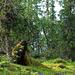 Wenn schon kein Elch, dann halt ein Bär.....
