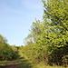 Unterwegs zum Srdov - Nahe des Sattels zwischen Srdov und Oblík verlassen wir den eigentlichen Wanderweg (zum Oblík, grün markiert). Diese Schneise führt uns nun in Richtung Srdov.