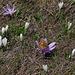 beim P.2065: ein Lichtblumen-Freund