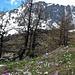 . . Blumenwiese, drüben über dem Bietschtal das Schwarzhorn
