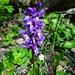 erste Orchideen auf dem Weg ...