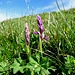Orchideen im frühen Blüh-Stadium