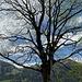 schöner Ahorn - vor malerischem Hintergrund