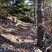 gut gängige Wege im Wald