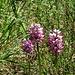 und noch mehr Orchideen