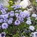 Eine Gruppe Kugelblumen
