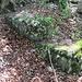 Die kümmerlichen Reste der Burgruine Wildentierberg