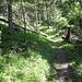 wunderbare Waldwege hinauf zur Elmbachquelle