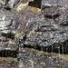 """Südwestlich des Slættaratindur - """"Dusche, aufgetaut"""". An der Felswand (nahe der Straße Eiði - Gjógv), welche vor vier Tagen noch vollständig vereist war, plätschert nun wieder Wasser. Foto vom 04.05.2013."""