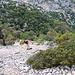 Abstieg zur Baccu Canale, steiler Schotter
