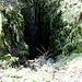 Creux de Glace - Ein gewaltiges, 40m tiefes Loch mitten im Wald. Der steile Abstieg ist oben mit einer Kette gesichert. Unten bei der Tanne wirds richtig steil und in heikler Kletterei gehts über die Tanne, feuchtes Moos, Erde und das Nährschneefeld des kleinen Gletschers in die Höhle.