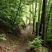 Waldweg um östlichen Ufer.