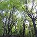 nei bei bosci salendo alla Capanna Genzianella