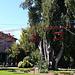 Il cipresso del Kashmir dell' Isola Madre, sul Lago Maggiore. Il più grande esemplare europeo di questa specie, che nella sua terra d' origine, ai piedi dell' Himalaya, sta scomparendo. Questo colosso dal fogliame verde argentato (tronco di 8 metri di diametro e altezza di oltre 25 metri), piantato nel meraviglioso giardino botanico dell' isola più di duecento anni fa e simbolo del lago, è stato abbattuto da una tromba d' aria il 28 giugno del 2006, ma i Borromeo e i giardinieri non si rassegnano alla perdita. Il cipresso è come una persona di famiglia, un grande nonno malato. Scatta un' operazione di salvataggio che mixa ingegneria e botanica: il 6 luglio 2006 un' équipe di 25 persone con tre gru portate in elicottero rimette a dimora il cipresso e lo fissa al terreno con 18 tiranti.<br /><br />Punto culminante del percorso di Velasco è Playtime, una giostra aerea, rossa come un giocattolo e leggerissima poiché fatta di tessitura metallica, alluminio e corda, che incorona il gigantesco cipresso del Cashmir
