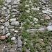 <b>Nell'acciottolato si scorgono dei sassi di porfido della Val Mara.</b>