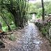<b>Acciottolato sotto Cerro.<br />Il toponimo ricorda la quercia amante del calcare (Quercus cerris). </b>