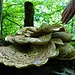 Ein Prachtsexemplar von einem Pilz. Ob man den essen könnte?