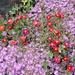 Vorbei bei Evas Haus mit dem prächtigen Garten. Begossen werden die Pflanzen mit Wasser aus der Zisterne.