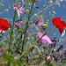 Trockenwiesen im Abstieg nach Sgurbio