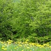 Frühlingswald oberhalb von Wasserauen.