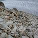 Abstieg auf den Gletscher (mit Steinmännern nicht markiert)