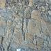 Wiedereinstieg in die Ostrippe nach Umgehung des markanten Turms (man beachte besonders die vielen losen Felsen, wobei die östlichen etwas fester sind)