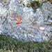 Bivio Q1660. A sinistra si prosegue per il passo di Pianca Bella e per cresta alla Foiorina, a destra ... l' eroica via del Torrione Sud