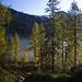 Der Lärchenwald ist Anfang Oktober bereits gelblich gefärbt und leuchtet im Abendlicht.