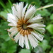 Für Botaniker gibt es allerlei Pflanzen zu begutachten