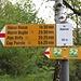 <b>In circa 20 min arrivo in zona Materone (905 m); da qui via vige un silenzio quasi assoluto; è un luogo molto piacevole, in una foresta sempre più ariosa. Il sentiero è molto curato: sarebbe percorribile anche con le ciabatte infradito.</b>